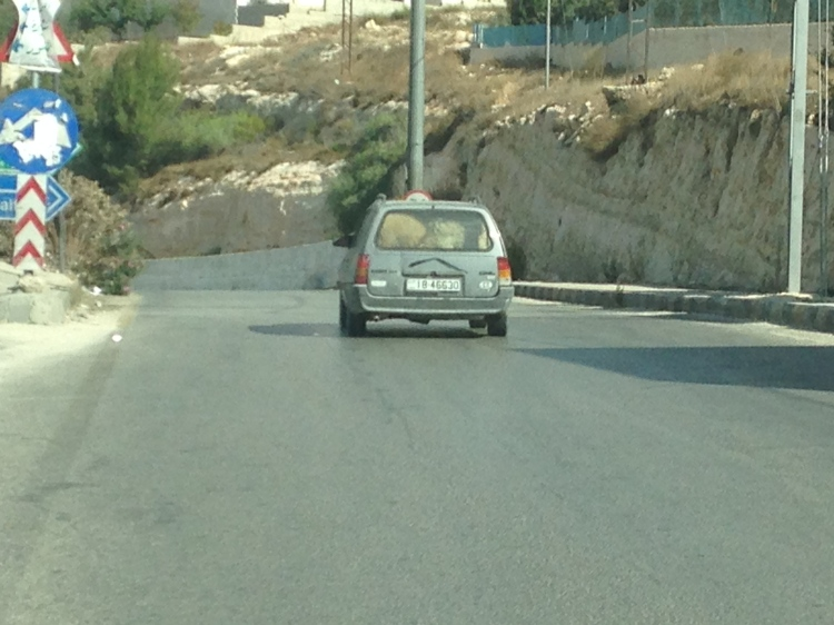 Two sheep in the back of a hatchback.
